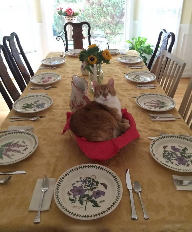 «Ой, это для еды? Ну что ж, я встану, когда мне тоже дадут еды».