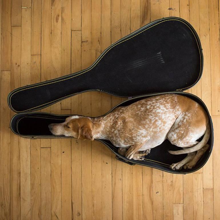 Возьмите на заметку, если вам нужно перевезти собаку за границу контрабандой