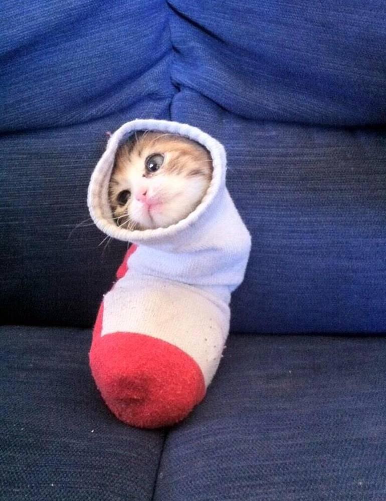 Для пелёнки этот носок слишком вонючий...