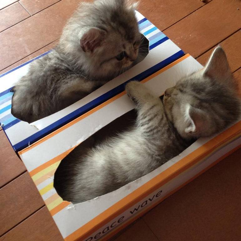 Отличный способ использовать пустые коробки от бумажных полотенец