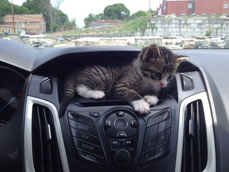 Приборная панель с держателем для кота