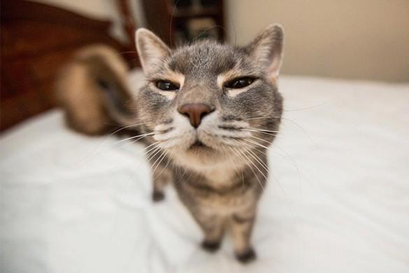 Самая лучшая подборка смешных котиков