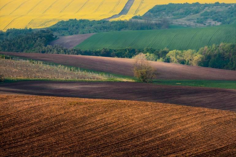 Поля Южной Моравии
