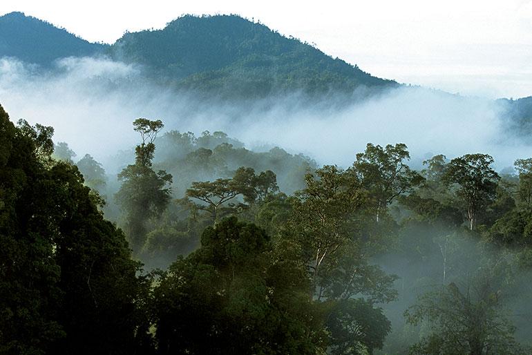 Малайзия для любителей экстремального отдыха