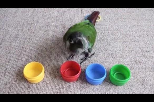 Попугай разгадывает головоломки