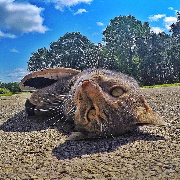 Селфи кот
